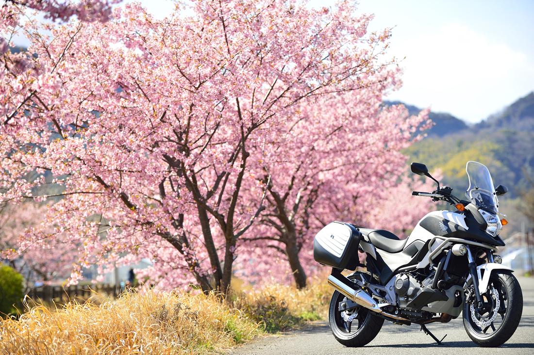 美しき桜・紅葉の名所へ